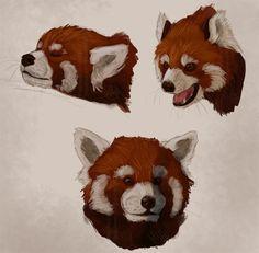 Head red panda