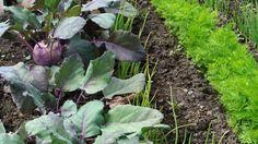 Fruchtfolge und Mischkultur im Garten | Frag Mutti