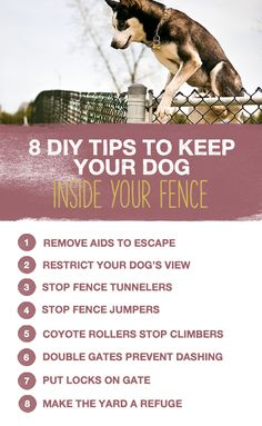 In our minds, dogs and fences go together, but what happens when your dog keeps jumping the fence? Check out these 8 DIY tips to keep your dog inside the fence! #THK #TheHonestKitchen #HonestKitchen #dogs #lifestyle #tips #training #fence