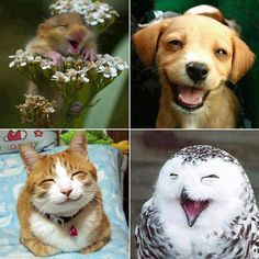 Cute animals)) will make you smile) Smiling Animals, Happy Animals, Cute Baby Animals, Funny Animals, Smiling Faces, Laughing Animals, Wild Animals, Animal Memes, Beautiful Creatures