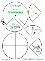 Grasshopper life cycle wheel and other insect activities.