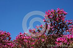 Photo about Public garden during springtime in Ireland. Image of summer, tree, pink - 53315592