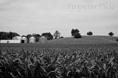 Black and White Farm  8 x 12 Photograph by perspectivephoto, $20.00