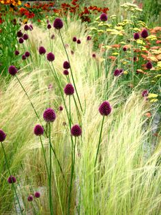 My Favorite Plant Combinations 8 (My Favorite Plant Combinations design ideas and photos is part of Prairie garden - My Favorite Plant Combinations 8 Prairie Garden, Garden Cottage, Prairie Planting, Types Of Flowers, Wild Flowers, Plant Design, Garden Design, Landscape Design, Beautiful Gardens