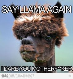 @Michelle Miller Levitt - Say Llama Again. I dare you, motherf*cker!
