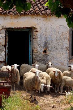 Scenes from the village of Armeni on the Island of Crete
