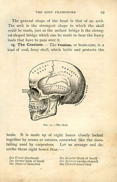 Vintage Halloween Clip Art - Anatomy Skull - Printable - The Graphics Fairy