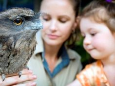 David Fleay Wildlife Park: Nestled in a secluded haven in the heart of Burleigh Heads is David Fleay Wildlife Park.    The park plays an important role in demonstrating Queensland Parks and Wildlife Service's conservation initiatives, particularly relating to threatened...