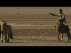 20-jarig jubileum terugkeer Przewalski paarden