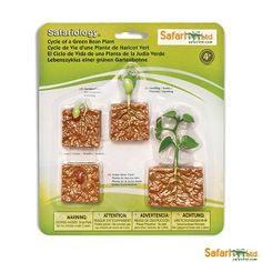 Levenscyclus van een boonplant miniaturen (Safari Ltd) (art. Green Bean Seeds, Green Beans, Plant Science, Life Science, Science Lessons, Art Lessons, Selective Breeding, Bean Plant, Stem Learning