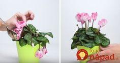 Indoor Plants, Garden Containers, Plants, Flowers, Planter Pots, Herbs, Garden, Gardening Tips