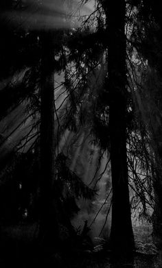 Black Aesthetic Wallpaper, Aesthetic Wallpapers, The Long Dark, Dark Landscape, Slytherin Aesthetic, Forest Wallpaper, Dark Pictures, Old Trees, Types Of Photography