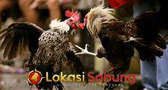 Untuk artikel kali ini kita akan membahas tentang jenis jenis Ayam Adu Terpopuler di Agen S128, informasi tentang jenis ayam laga terpopuler ini merupakan gambaran nyata pasar dari setiap jenis ayam adu. Mungkin bisa menjadi sumber informasi yang berguna bagi supplier, peternak, importir, maupun pen…