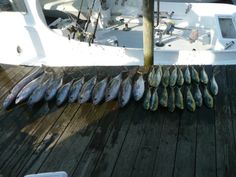 great day fishing