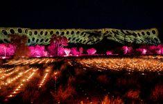 Red Dirt Vivid: Parrtjima Festival Returns to Alice Springs - Broadsheet Australian Architecture, Australian Homes, Australian Art, Alice Springs, Little Gardens, Most Beautiful Gardens, Architecture Awards, Workspace Inspiration, The Design Files