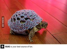 A tortoise in a sweater. Lol love it!