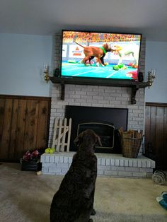 My boy watching the Puppy Bowl   http://ift.tt/2kDMGng via /r/dogpictures http://ift.tt/2kIb1bb  #lovabledogsaroundtheworld