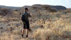 Tracking a wild dog, Okonjima, Namibia