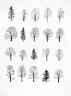 PRINT Katie Holten - New York Trees I ink on paper , 30 x 22 inches