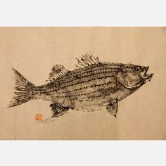 Striped Bass Original Print now featured on Fab.