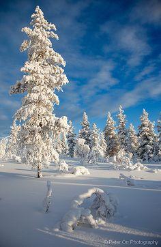 True colours of the Finnish winter! Lapland, near Kiilopaa, Finland. Winter Magic, Winter Snow, Winter White, Winter Christmas, Finland Travel, Lapland Finland, I Love Snow, Winter Scenery, Snow Scenes