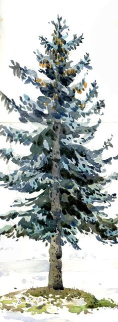 Blue Spruce - Water color dream tattoo