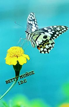 BETTY MUÑOZ  I.D.C