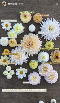 Flower Garden Plans, Cut Flower Garden, Flower Farm, Cut Garden, Types Of Flowers, Cut Flowers, Beautiful Flowers, Flower Names, Dahlia Flower