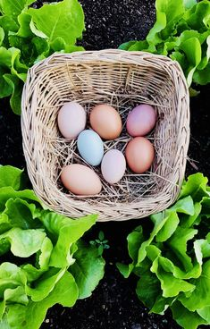 Tour, Eggs, Backyard Farming, Egg, Egg As Food