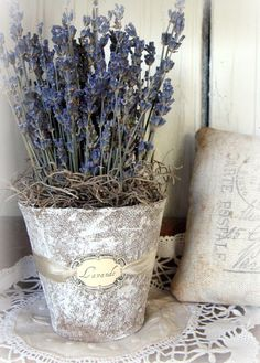 Peat pot with lavender