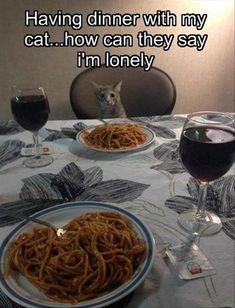 Crazy cat lady dinner