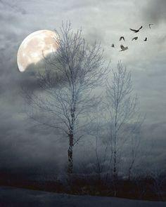 Dreamy  blue surreal trees, winter landscape, dark, snow, ice, birds in flight, home decor wall art - Winter Moon 8 x 10