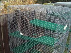 outside cat enclosure   CAT ENCLOSURE ARTICALS