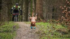 Faster than a speeding bullet, this super dog hits the trails hard!