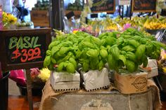Houweling's Basil At Fresh St. Farms on Fraser Highway