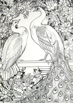Trendy white bird drawing coloring pages ideas Peacock Coloring Pages, Animal Coloring Pages, Coloring Book Pages, Peacock Painting, Peacock Art, White Peacock, Peacock Colors, Peacock Feathers, Fabric Painting