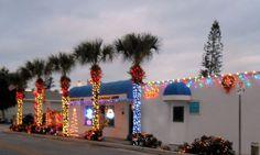 Christmas Palms!