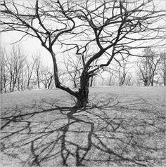 leefriedlander trees - Google Search