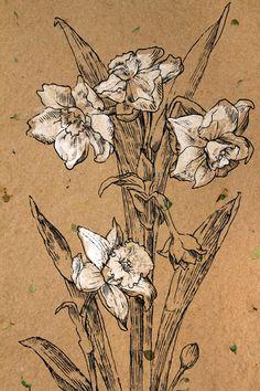 Narciso blanco. Dibujo de tinta negra. Papel hecho a mano. Obras de arte originales. Tabla de botánica. Dibujo de línea. Decoración floral. ...