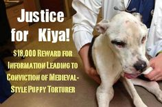 "I PRAY THIS MOMENT IS N E V E R CAPTURED AGAIN....Do you know who tortured ""puppy doe"" also known as Kiya ? We want to see those person(s) punished for this crime! Justice for Kiya. https://www.facebook.com/JusticeForPuppyDoe/info"