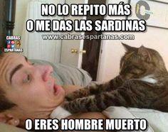 Cartel de humor Amenaza de un gato hambriento La película