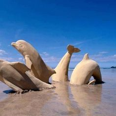 Check out this cool dolphin sand sculpture.