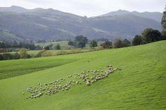 Nos valeurs - Coopérative Laitière du Pays Basque