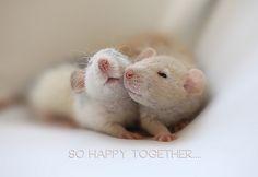 Friendship by Ellenvd, via Flickr