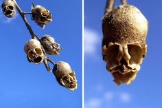 17 Flowers You Wont Believe Actually Exist. Candy Skulls - these would be scary if you came across the when lost