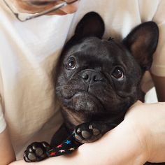 ❤️Happy Father's Day❤️ Dad, I am the luckiest frenchie in the world, because I h