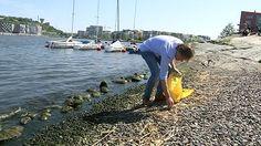 Den ideella organisationen Städa Sverige har förlorat sin huvudsponsor till ett projekt som skulle hålla rent på våra badplatser. Nu vill de att näringslivet ska ta sitt ansvar för nedskräpningen.