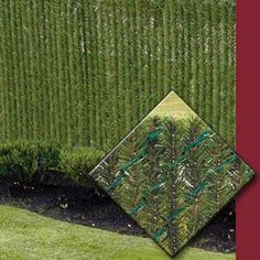 tall hedges privacy - Google Search