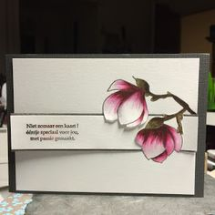 elke's blog: magnolia