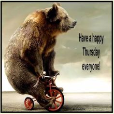 Have a happy thursday everyone funny cute day bear thursday happy thursday happy thursday quotes Thursday Greetings, Happy Thursday Quotes, Thursday Humor, Its Friday Quotes, Happy Friday, Thursday Motivation, Happy Tuesday, Nice Good Morning Images, Good Morning Funny